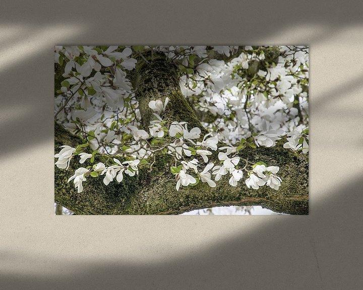 Sfeerimpressie: Witte bloemen van de Magnolia lentebloesem van Jessica Berendsen