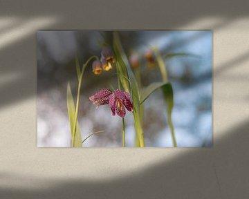 Blumen Teil 84 von Tania Perneel