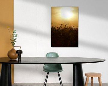 Opkomende zon boven het riet in Het Waterrijk. van Jurjen Jan Snikkenburg