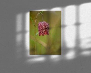 Wilde kievitsbloem van FotoAmsterdam / Peter Bartelings