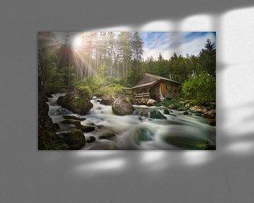 Rivier met hut in bos van Markus Weber