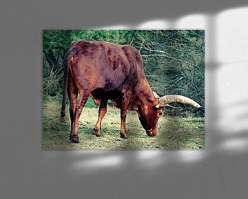 Grasfressender Büffel von Wieland Teixeira
