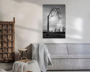 Hoe een zwart wit foto van de natuur toch kleur geeft aan je interieur van Jacques Jullens