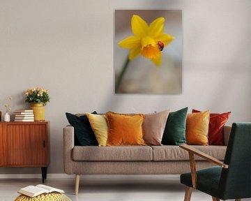 Lieveheersbeestje op Narcis van Marga Vroom