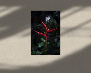 Tropische Blume von Daniel Damnitz