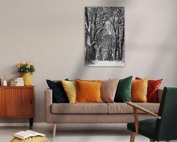 Winterliche Eichenallee in schwarz & weiss