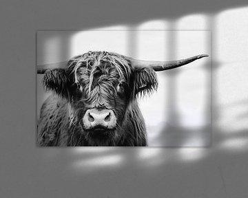 Portret van Schotse Hooglander koe in zwart wit / rund van KB Design & Photography (Karen Brouwer)