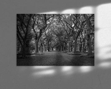 Central Park, New York van Vincent de Moor