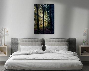 Zonnestralen in het bos. van Jurjen Jan Snikkenburg