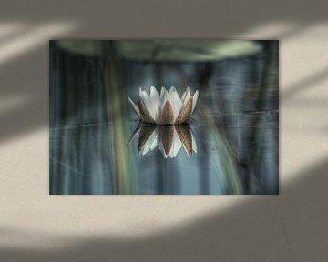 Lily von BL Photography