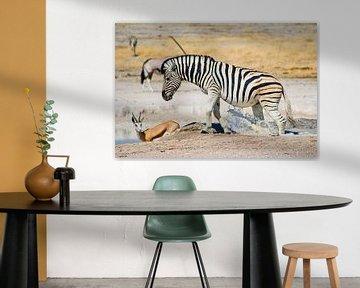 Zebra Splash von BL Photography