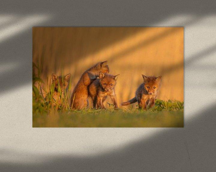 Sfeerimpressie: vossenwelpjes van Ina Hendriks-Schaafsma