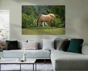 Ein grasendes Koninckspferd von Jurjen Jan Snikkenburg