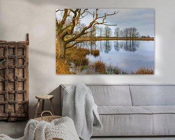 Moddergat in Nationaal Park Dwingelderveld