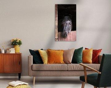 Grijs dier trekpaard in rustiek houten stal
