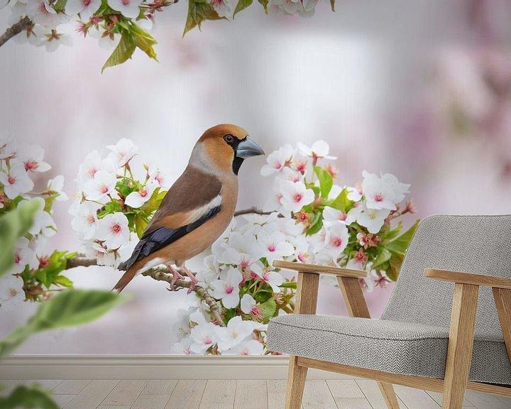 Beispiel fototapete: Apfelfink in der Blüte von Ina Hendriks-Schaafsma