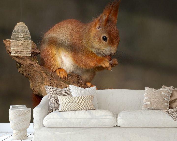 Sfeerimpressie behang: eekhoorn eet een nootje van Ina Hendriks-Schaafsma