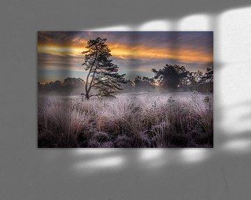 Sfeervolle ochtend op de Beegder Heide van Peschen Photography