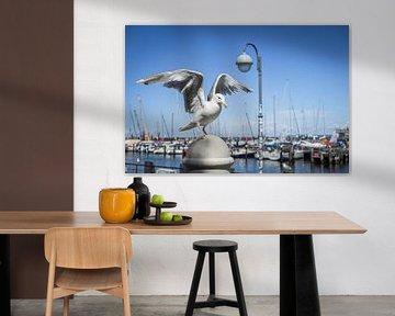 Möwe am Hafen von Jürgen Schmittdiel Photography