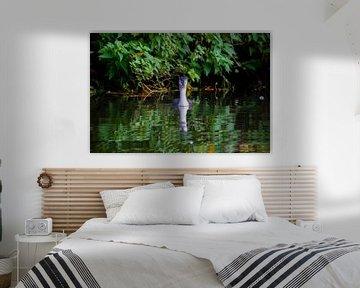 Fuut in rivier in bos bij Utrecht van John Ozguc
