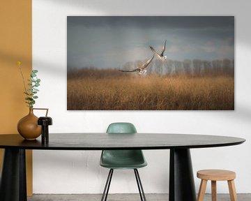 Wegvliegende eenden in een herfst landschap in de Oostvaardersplassen van Jan Hermsen