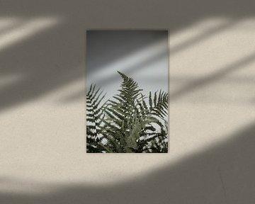 Minimalistische Farnblätter für weiße Wand | Amersfoort, Niederlande von Trix Leeflang