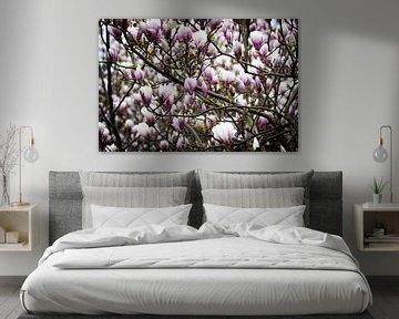 Magnolien in Blüte von Jaimy Leemburg Photography