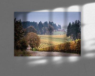 Wijngaarden in de herfst in Oregon
