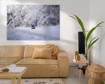 Border Collies posieren in der Nähe von verschneiten Bäumen von Pieter Bezuijen