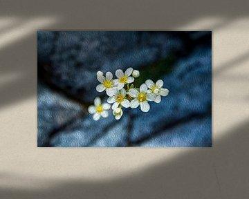 Breaking stones van Susan Hol