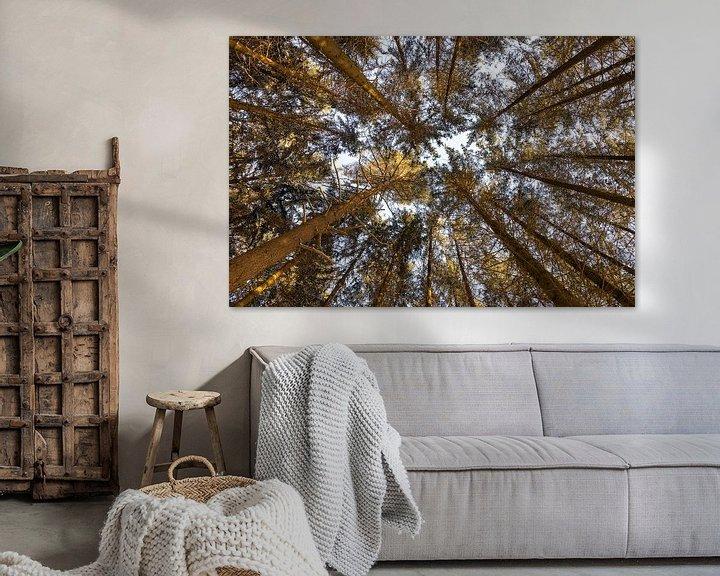 Sfeerimpressie: Coniferen van Christoph Schaible