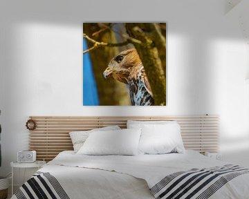 Detaillierter Kopf eines Bussards in einem Baum, blauer Himmel. Kopf und Brust im Fokus. von Gea Veenstra