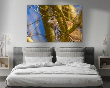 Gedetailleerde kop van een buizerd in een boom, blauwe lucht.  Gedeelte van de rug in beeld. Tegen e van Gea Veenstra