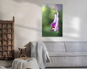Roze orchidee von Studio Zwartlicht