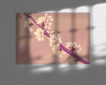Sleedoorn in bloei van Harmen Mol