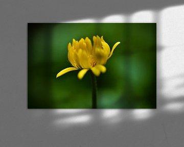 Frühlingserwachen von Foto Oger