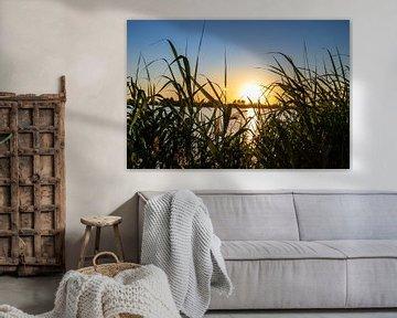 Haag aus Schilf mit Sonnenuntergang von thomas van der Wijngaard