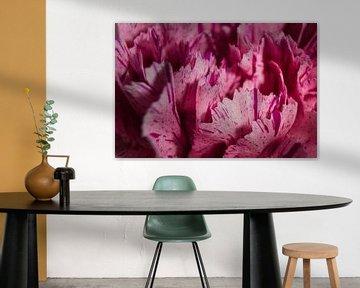 Rosa Blütenblätter von Joran Quinten