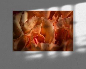 Weiches orangefarbenes Herz von Joran Quinten