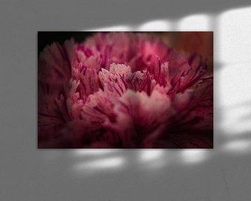 Roze bloemblaadjes in close up van Joran Quinten