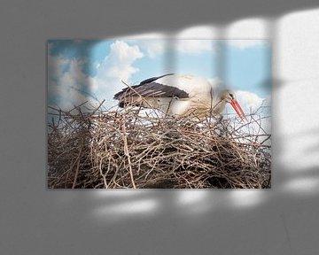 Een ooievaar staat in het nest, takje in de snavel. Blauwe lucht met witte wolken in de achtergrond. van Gea Veenstra