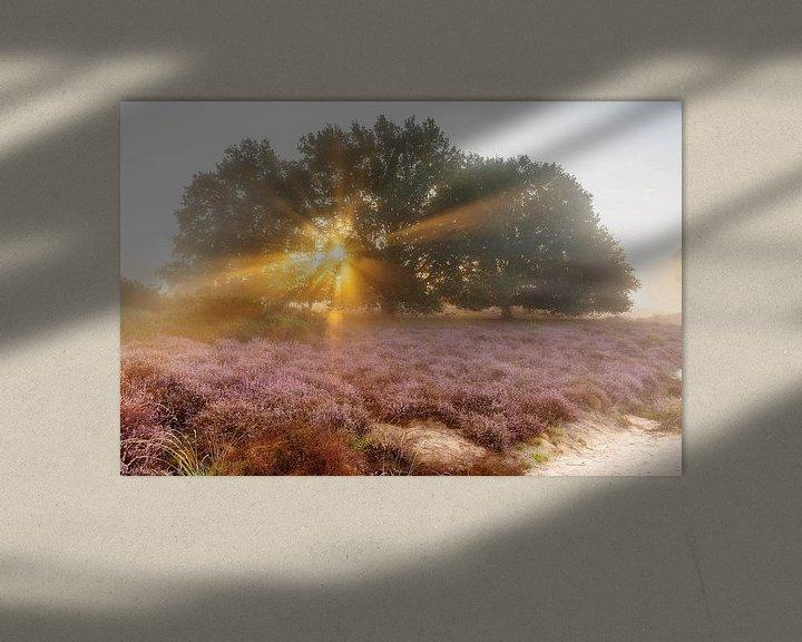 Sfeerimpressie: Zonnestralen boven de paarse heide van Monique van Genderen (in2pictures.nl fotografie)