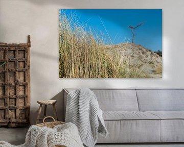 Gras , duin, boom en blauwe lucht van Jaco Verheul