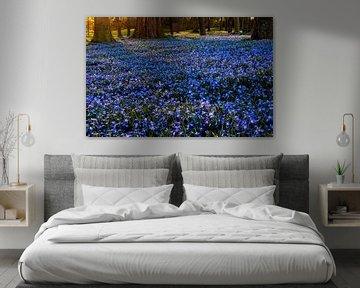 Blumenteppich von Scilla von Adelheid Smitt