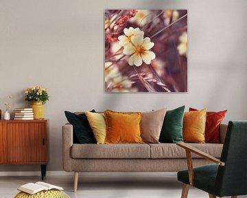 Wildblumen von Violetta Honkisz