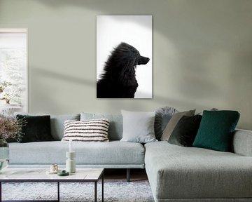 Zwarte poedel Zinzi van Janine Bekker Photography