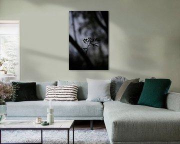 Scherenschnitt-Anlage von Janine Bekker Photography