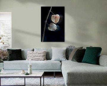 Tanzende Laternenpflanze von Remke Spijkers