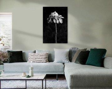 Nature Morte - Sonnenblume (schwarz und weiß) von Remke Spijkers