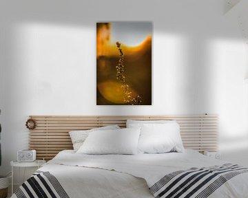 Kaffir-Körner bei Sonnenuntergang von Jaimy Leemburg Photography